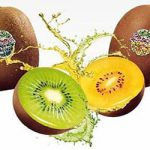 Fresh kiwi fruit for sale