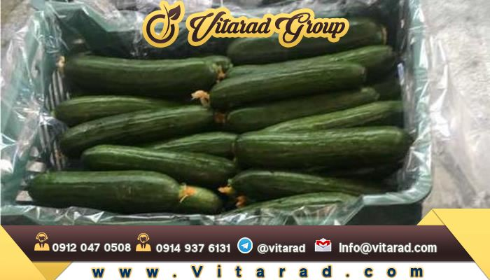 Barbed cucumber export from Iran