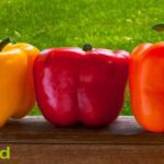 Bell pepper average price