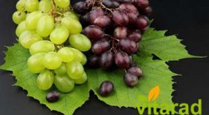Grapes importing countries