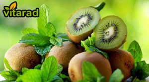 Iran kiwi fruit for exports