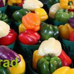 Yellow bell pepper price