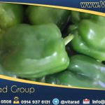Iranian green sweet pepper for buying