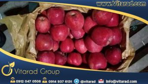 Iranian red delicious apple tree export