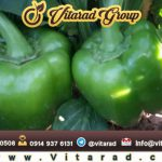 Buy sweet green pepper for export