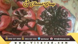 Red pomegranate Saveh for export