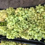 20 tons of Iranian grapes
