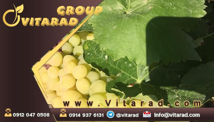 Buy the most expensive yellow grapes in Iran